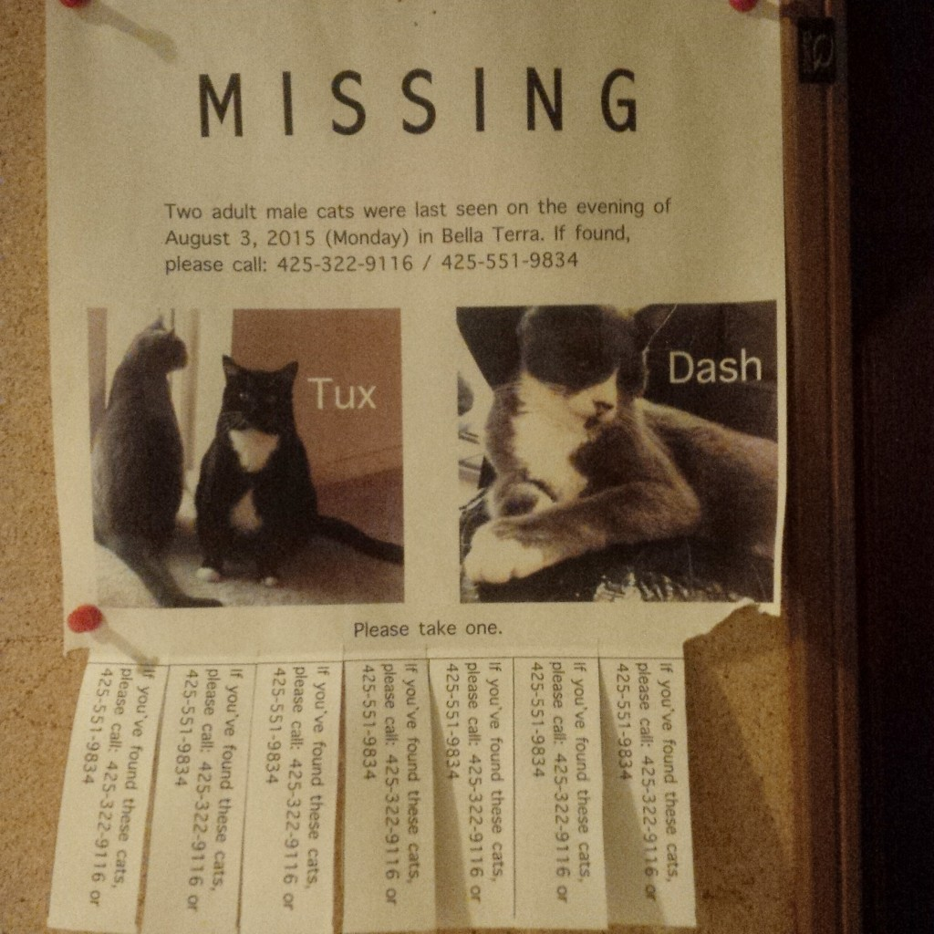 Lost Cats in Bella Terra in Harbour Pointe Mukilteo Washington